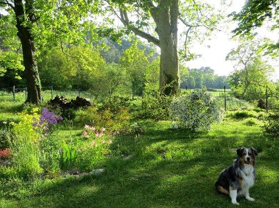 le coin préféré de mon jardin : autour de la mare Mai_2011