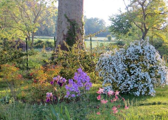 le coin préféré de mon jardin : autour de la mare Mai_2014
