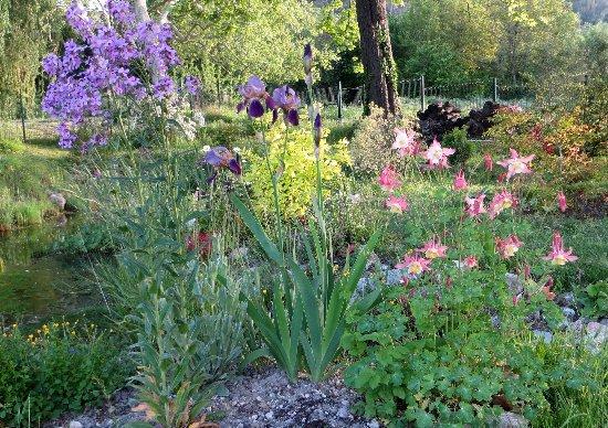 le coin préféré de mon jardin : autour de la mare Mai_2015