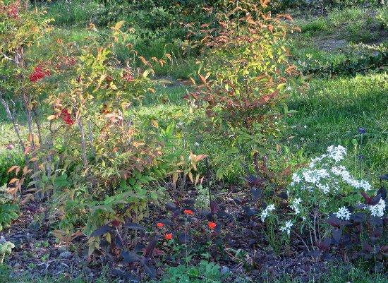 le coin préféré de mon jardin : autour de la mare Mai_2016