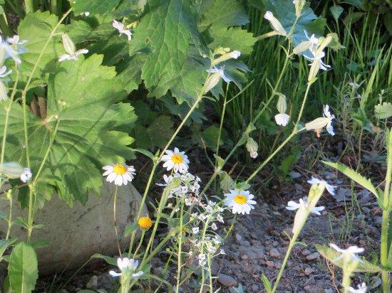 le coin préféré de mon jardin : autour de la mare Mai_2019