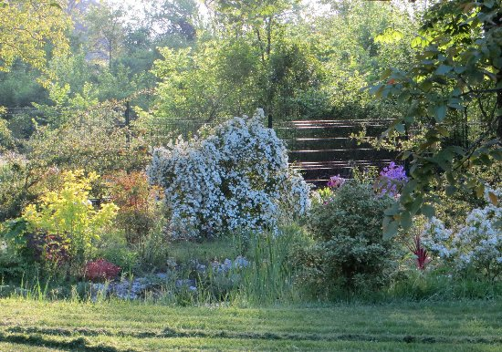 le coin préféré de mon jardin : autour de la mare Mai_2020