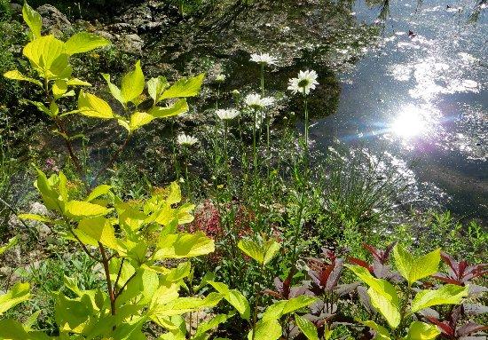 le coin préféré de mon jardin : autour de la mare Mai_2024