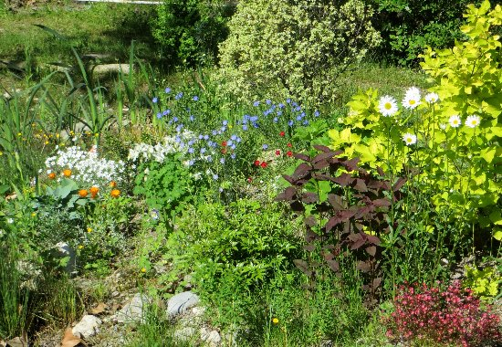 le coin préféré de mon jardin : autour de la mare Mai_2025