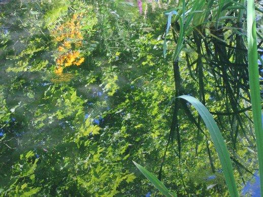 le coin préféré de mon jardin : autour de la mare Nature12