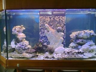 nouvel aquarium eau de mer 15012010