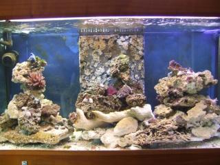 nouvel aquarium eau de mer Dscf0610