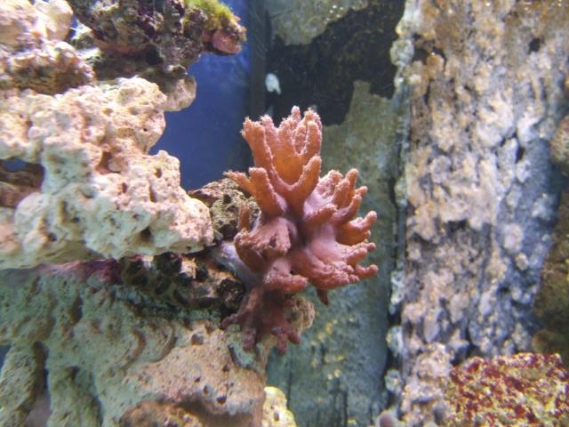 nouvel aquarium eau de mer Dscf0614
