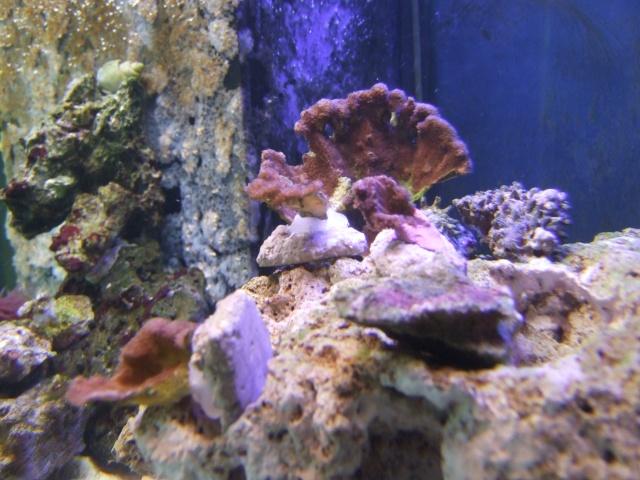 nouvel aquarium eau de mer Dscf0615