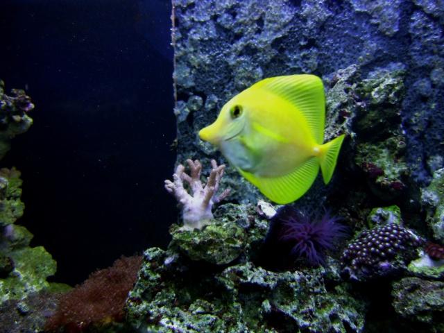 nouvel aquarium eau de mer Dscf0618
