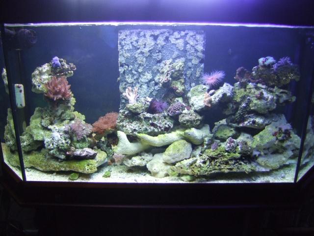 nouvel aquarium eau de mer Dscf0619