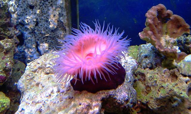 nouvel aquarium eau de mer Imag0110
