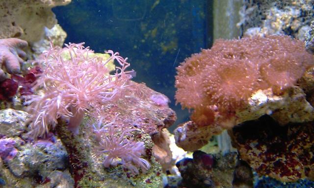 nouvel aquarium eau de mer Imag0112