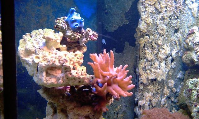 nouvel aquarium eau de mer Imag0113