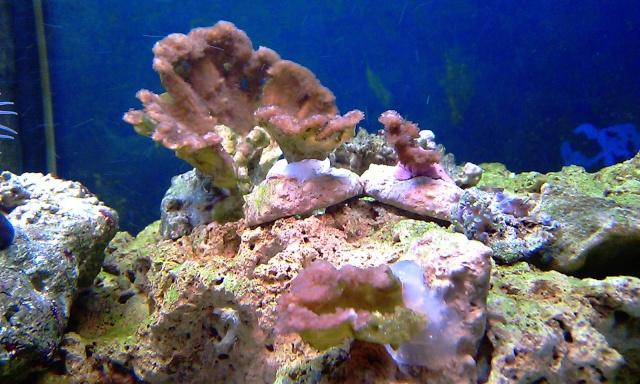 nouvel aquarium eau de mer Imag0114