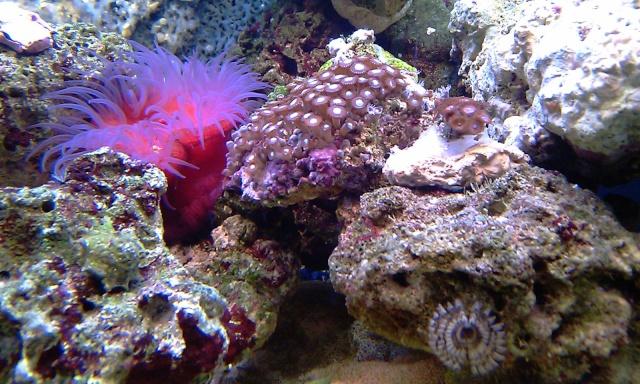 nouvel aquarium eau de mer Imag0115