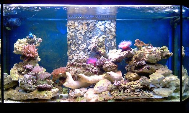 nouvel aquarium eau de mer Imag0210