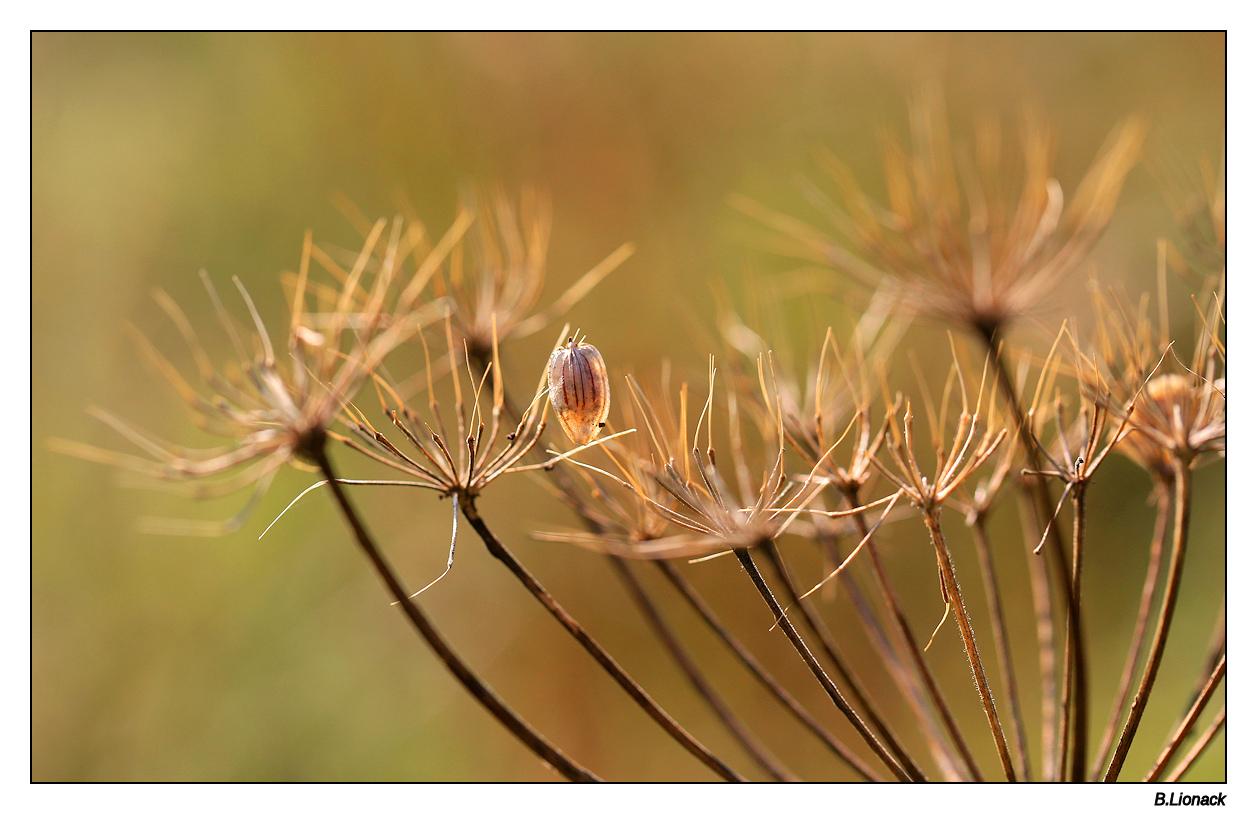 Un avant goût d'automne... Automn10