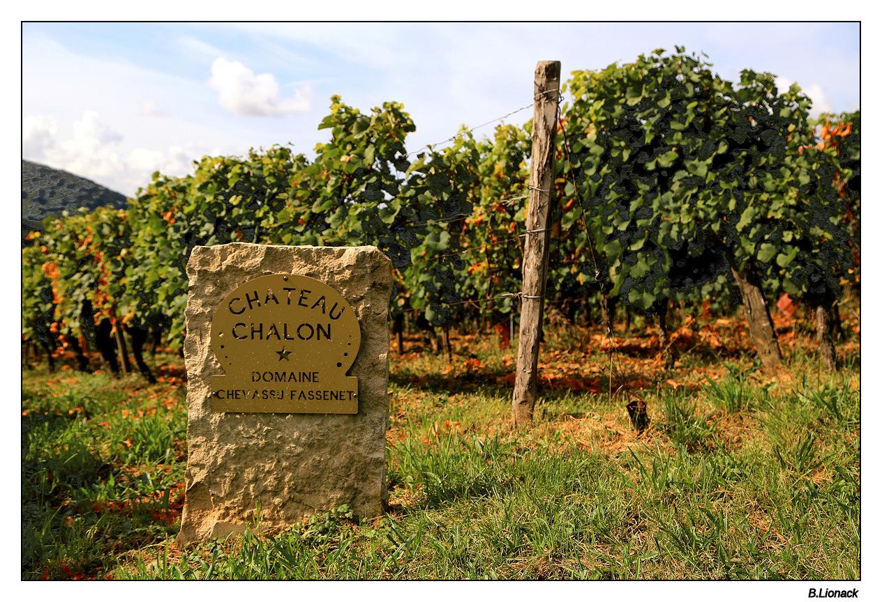 Balade au pays du vin jaune Domain11