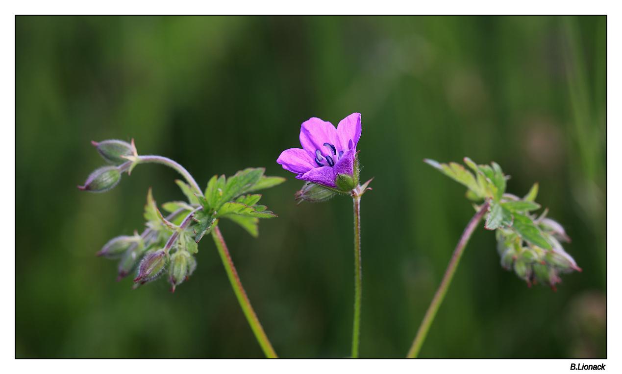 Petite champêtre Fleur10