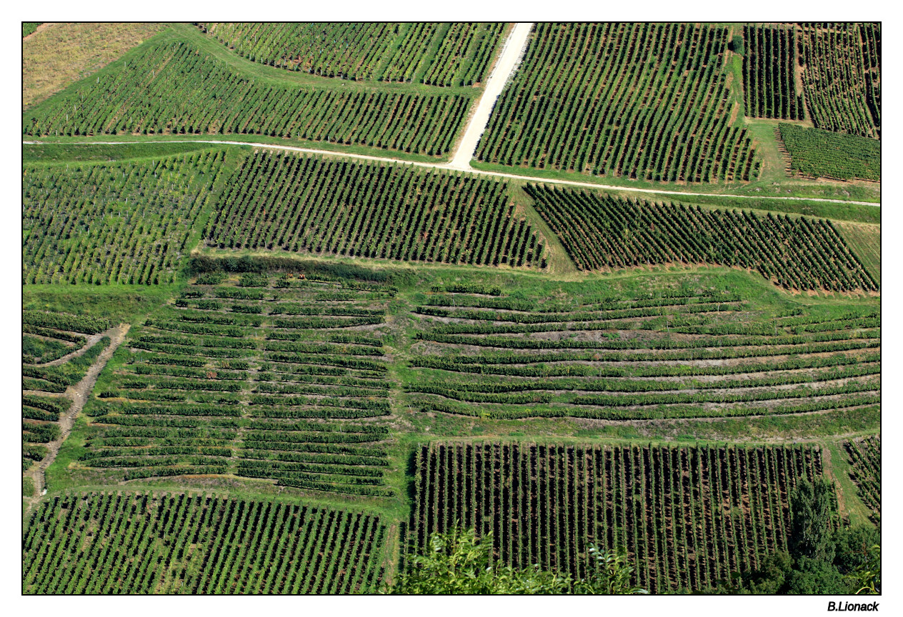 Balade au pays du vin jaune Parcel10