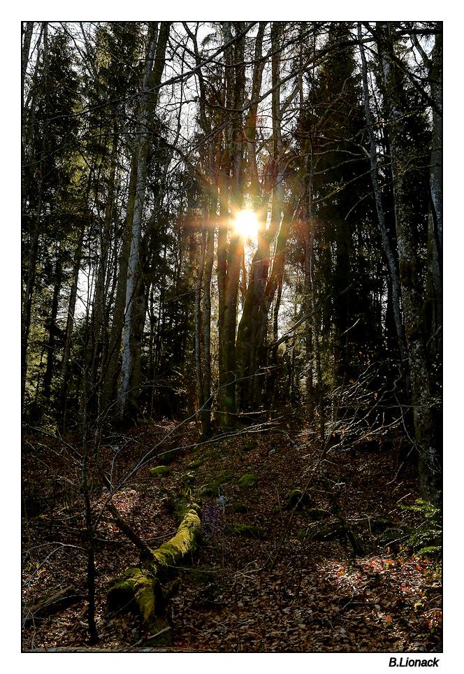 Petit matin dans la forêt Souboi10