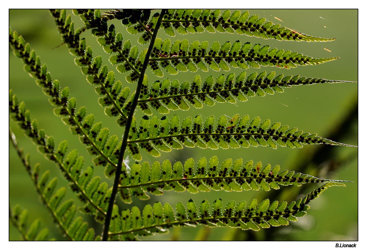 Spores extrêmes Spores10