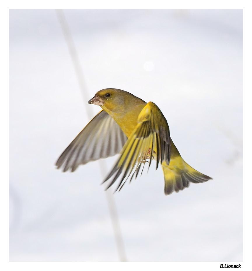 à tire d'ailes Verdie24