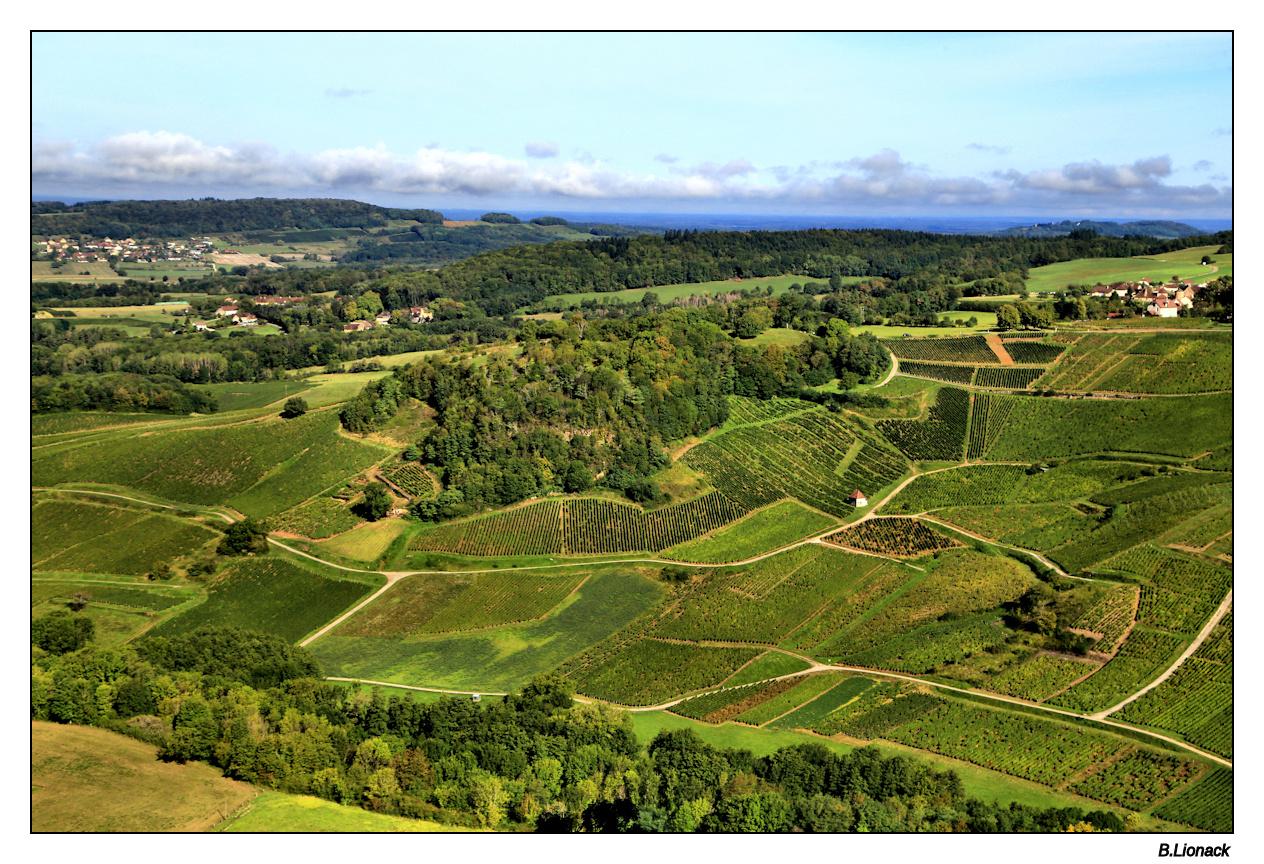 Balade au pays du vin jaune Vignob10