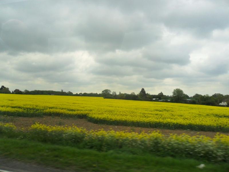 Mon voyage en Grande Bretagne - 3 - La campagne anglaise Sam_2410