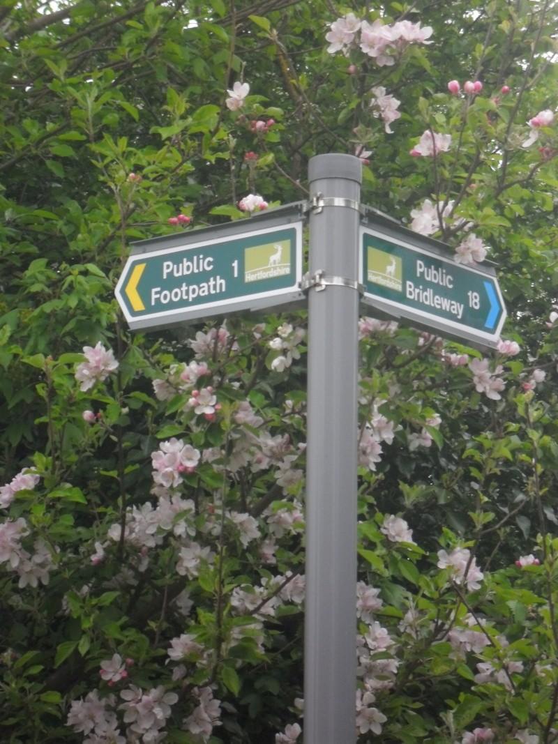 Mon voyage en Grande Bretagne - 3 - La campagne anglaise Sam_2512