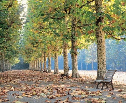 Парк в центре Мистик Фоллса Img_1710