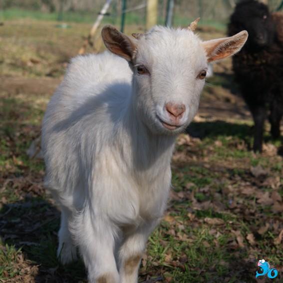 les animaux de jo 03lili10