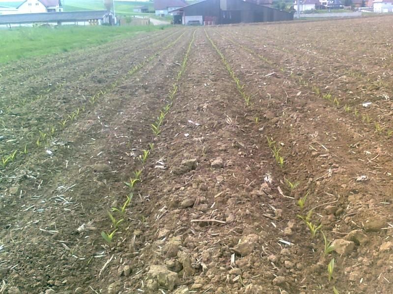 semis de maïs 2013  Photo010