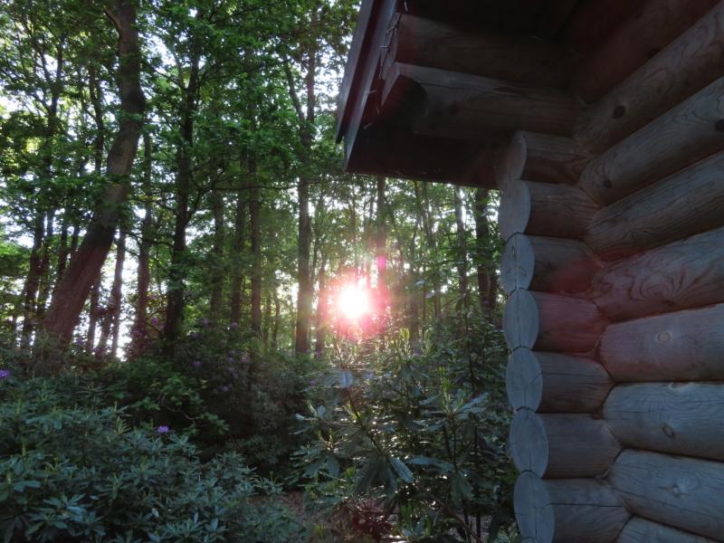 Alpine Grove - nr Chard Aimg_120