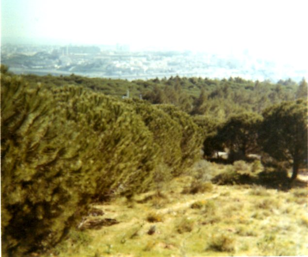 Lisbonne 20042616