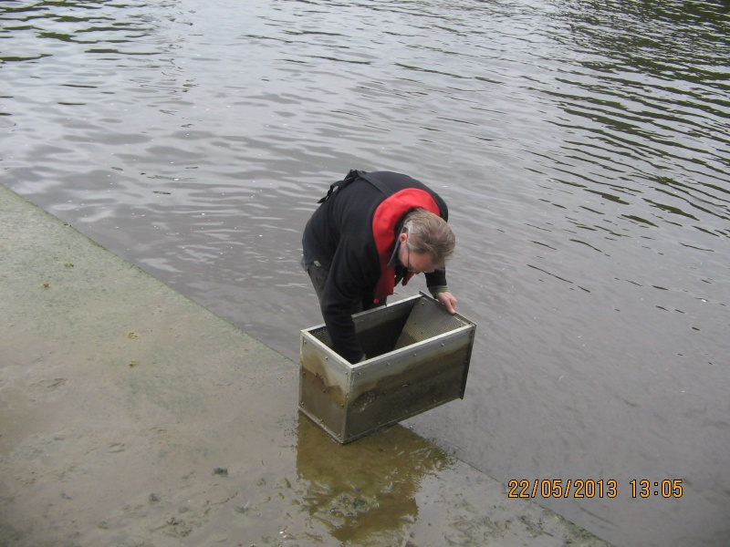 Molesey Eel trap results 2013 - Page 3 Img_0344