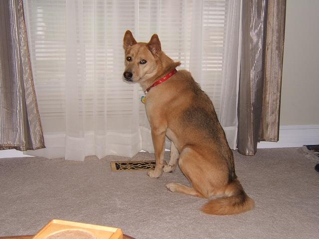 Is my dog part husky? Biscui24