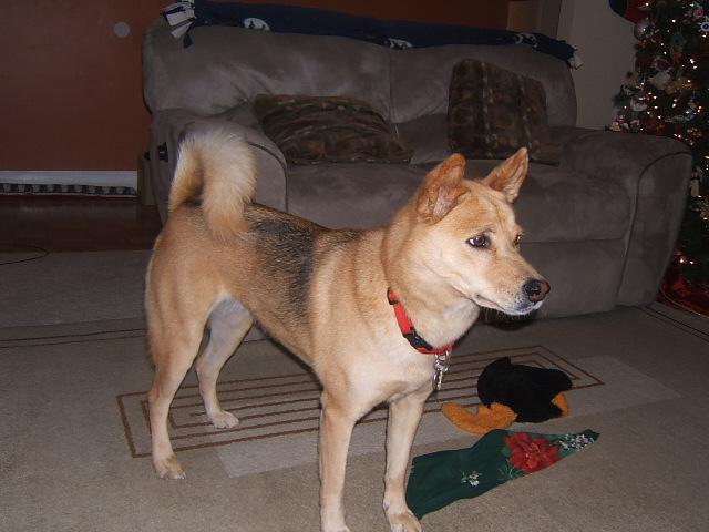 Is my dog part husky? Dscf5310