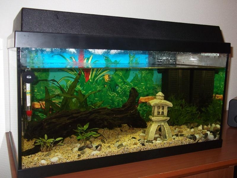 Nidalapa : 60 L  du poisson rouge à l'aquariophilie 110