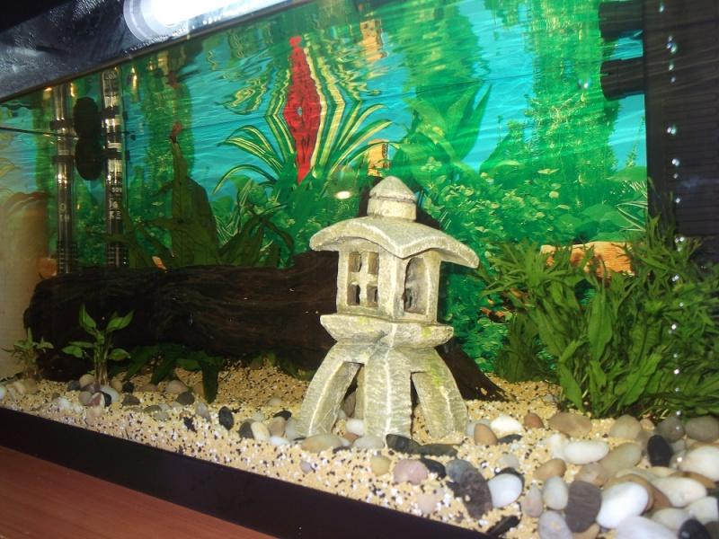Nidalapa : 60 L  du poisson rouge à l'aquariophilie 210