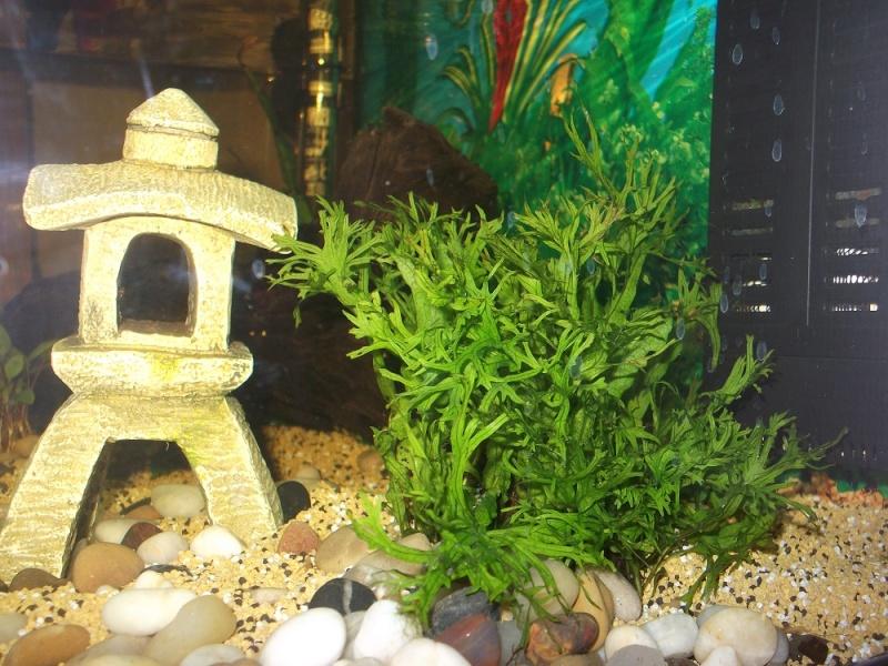 Nidalapa : 60 L  du poisson rouge à l'aquariophilie 310