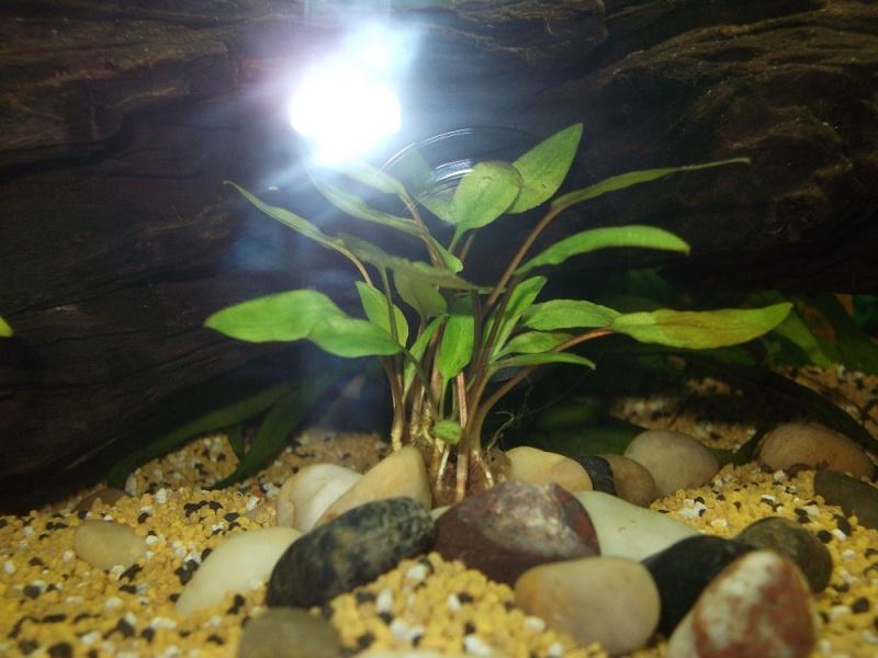 Nidalapa : 60 L  du poisson rouge à l'aquariophilie 410