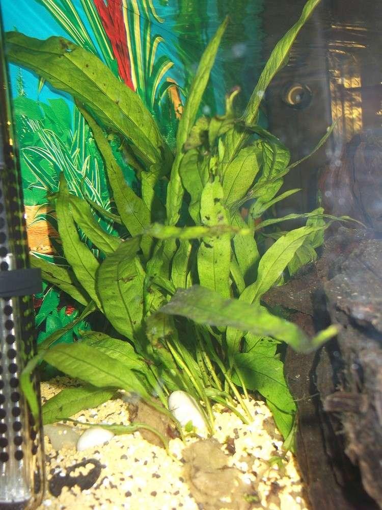 Nidalapa : 60 L  du poisson rouge à l'aquariophilie 510