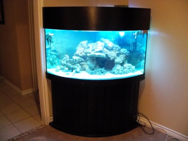 Charming 90 Gallon Corner Aquarium Dimensions Best Accent Chairs And