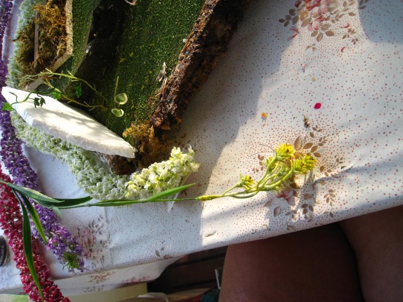 Eden fantaisie (1e essai fleuri) Img_8512