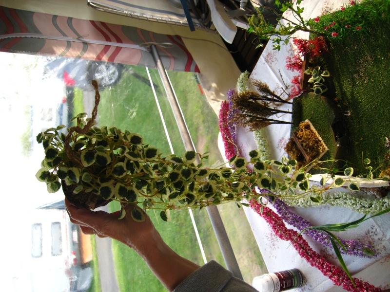Eden fantaisie (1e essai fleuri) Img_8513