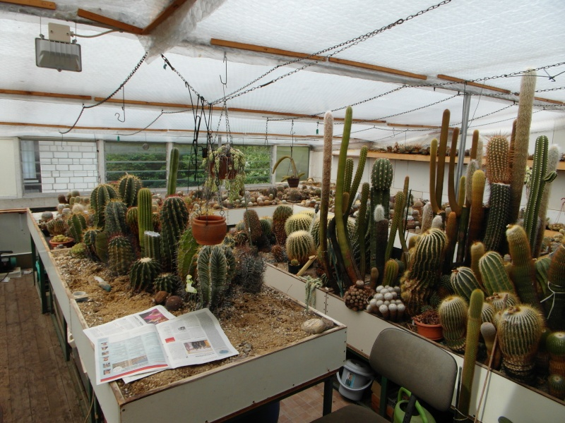 Cacti and Sukkulent in Köln, every day new flowers in the greenhouse Part 51 Bild1029