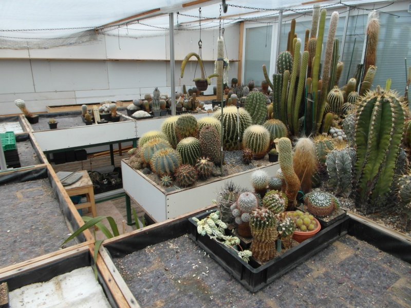 Cacti and Sukkulent in Köln, every day new flowers in the greenhouse Part 51 Bild1030