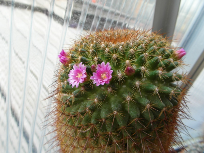 Cacti and Sukkulent in Köln, every day new flowers in the greenhouse Part 51 Bild1050